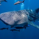 Tours and Wildlife Encounters in Cancun and Riviera Maya