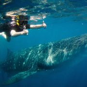 Cancun Whale Shark Tours