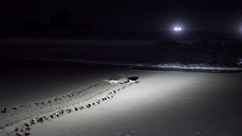 TURTLES NIGHT WATCHING