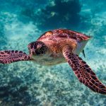 Quick guide to the Sea turtles of Mexico – Part 1