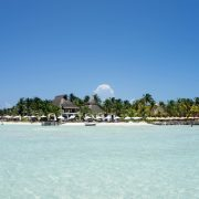 Cancun Whale Shark Tours