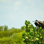 Bird watching in Contoy Island