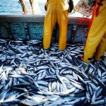 Overfishing is happening all over the world